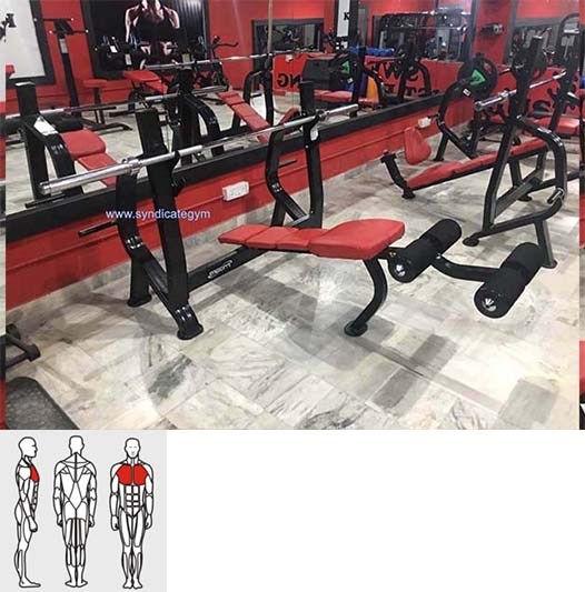 Gym Equipment Vendors: Olympic Decline Bench Manufacturer In India